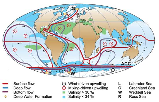 The Thermohaline Ocean Circulation